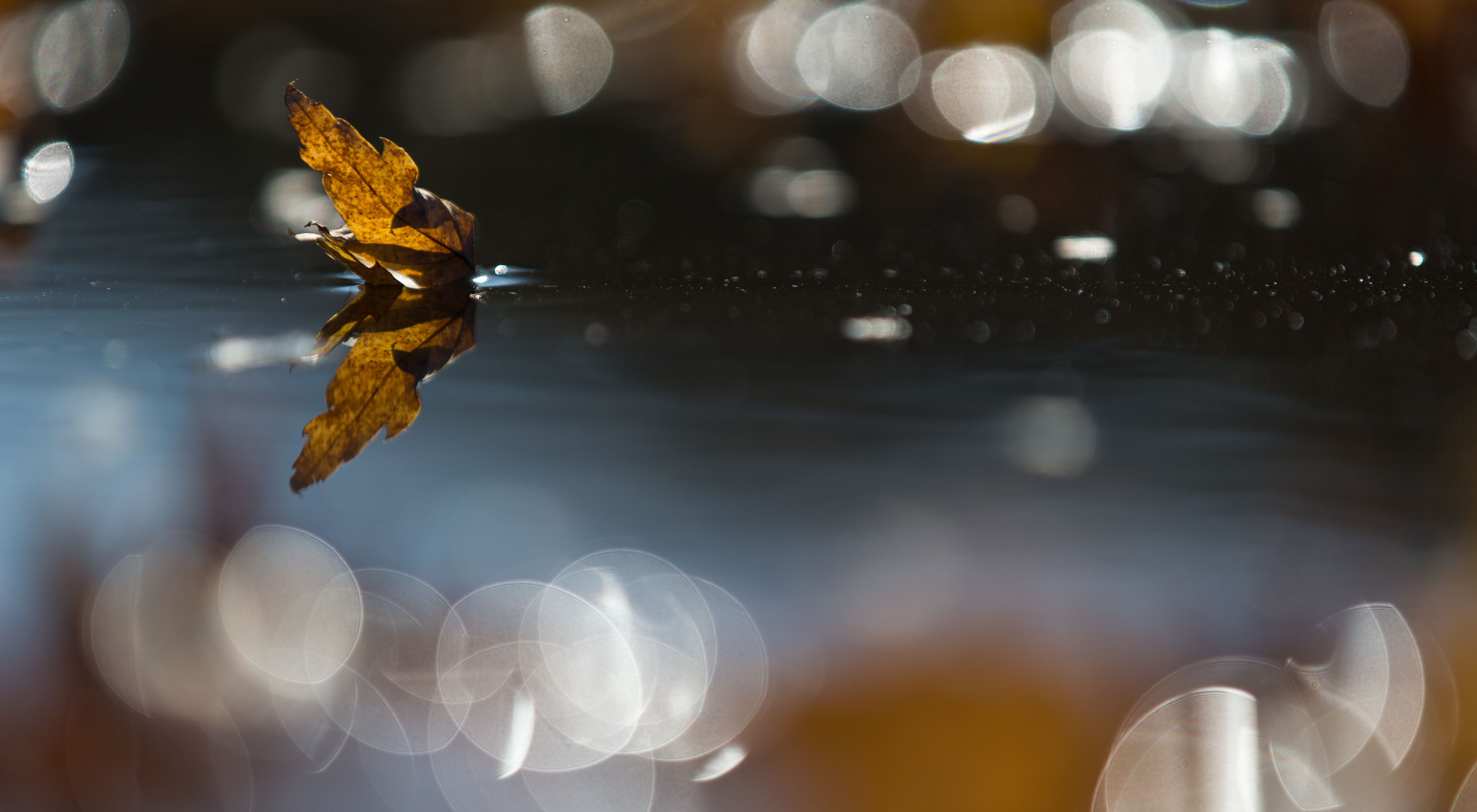 A LEAF ON THE WATER filters golden light through the water's surface.