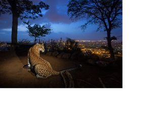A leopard at night on a hill overlooking Mumbai.