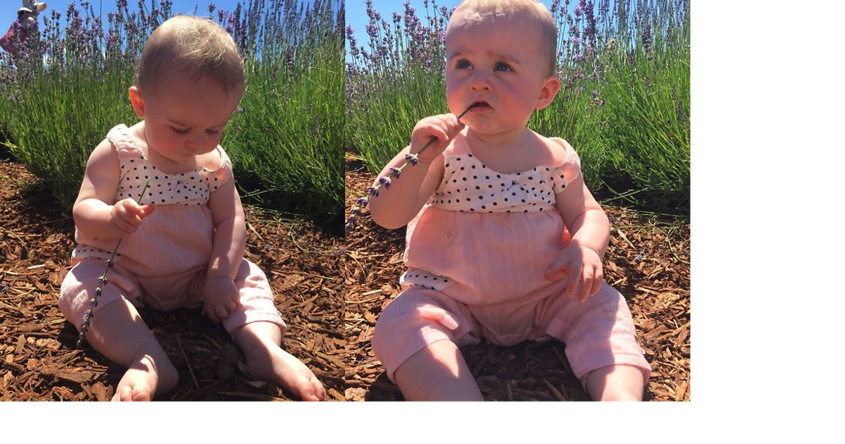 Lillian says lavender not only smells amazing, it tastes good too.