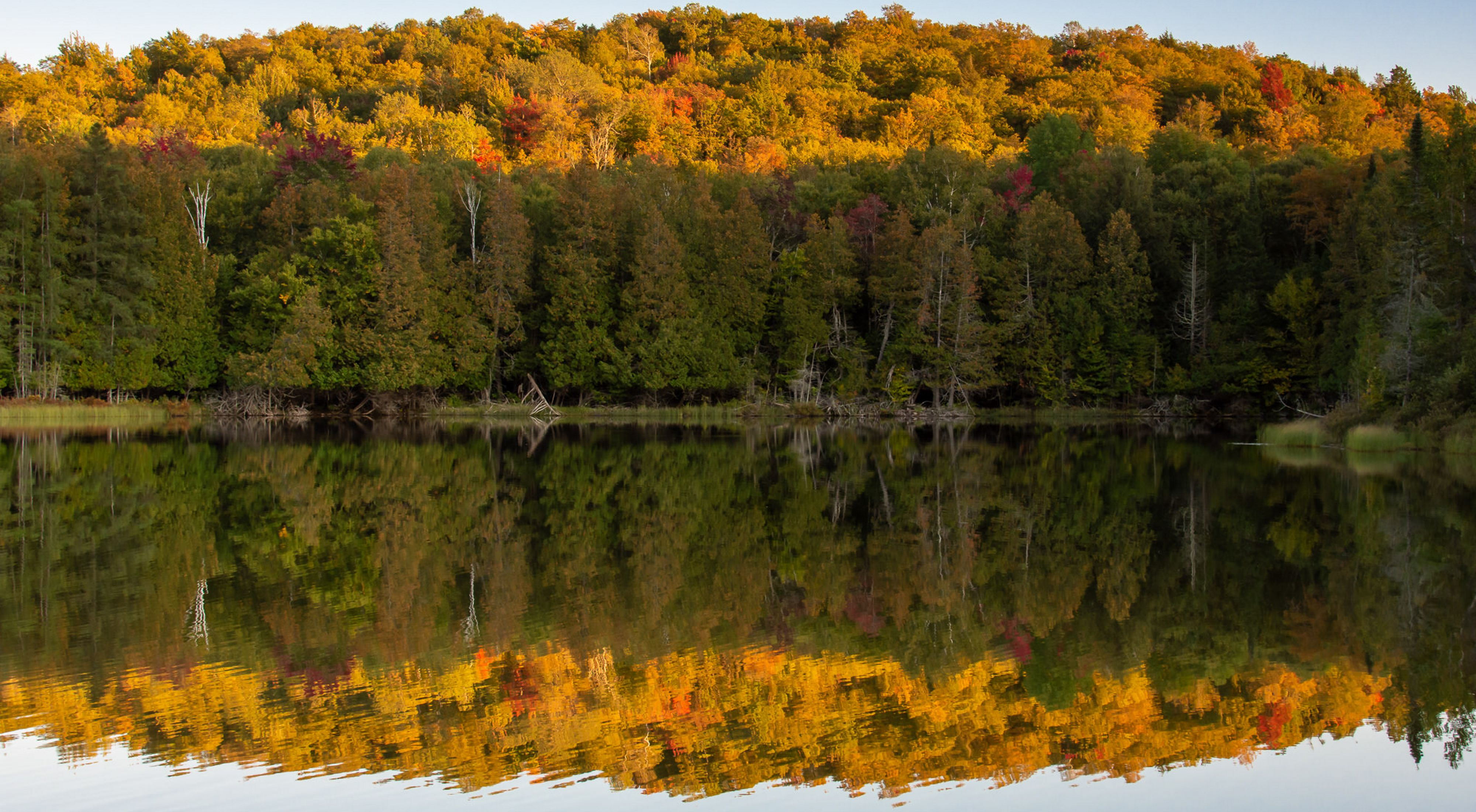A forest of trees in full fall color are reflected like a mirror in a lake in the foreground.