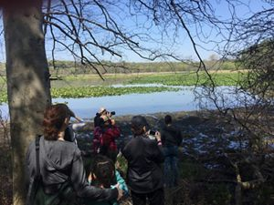 Five people stand at the edge of a wetland taking photos during a nature hike.