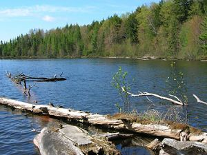 Forested lake shore with log in water in foreground
