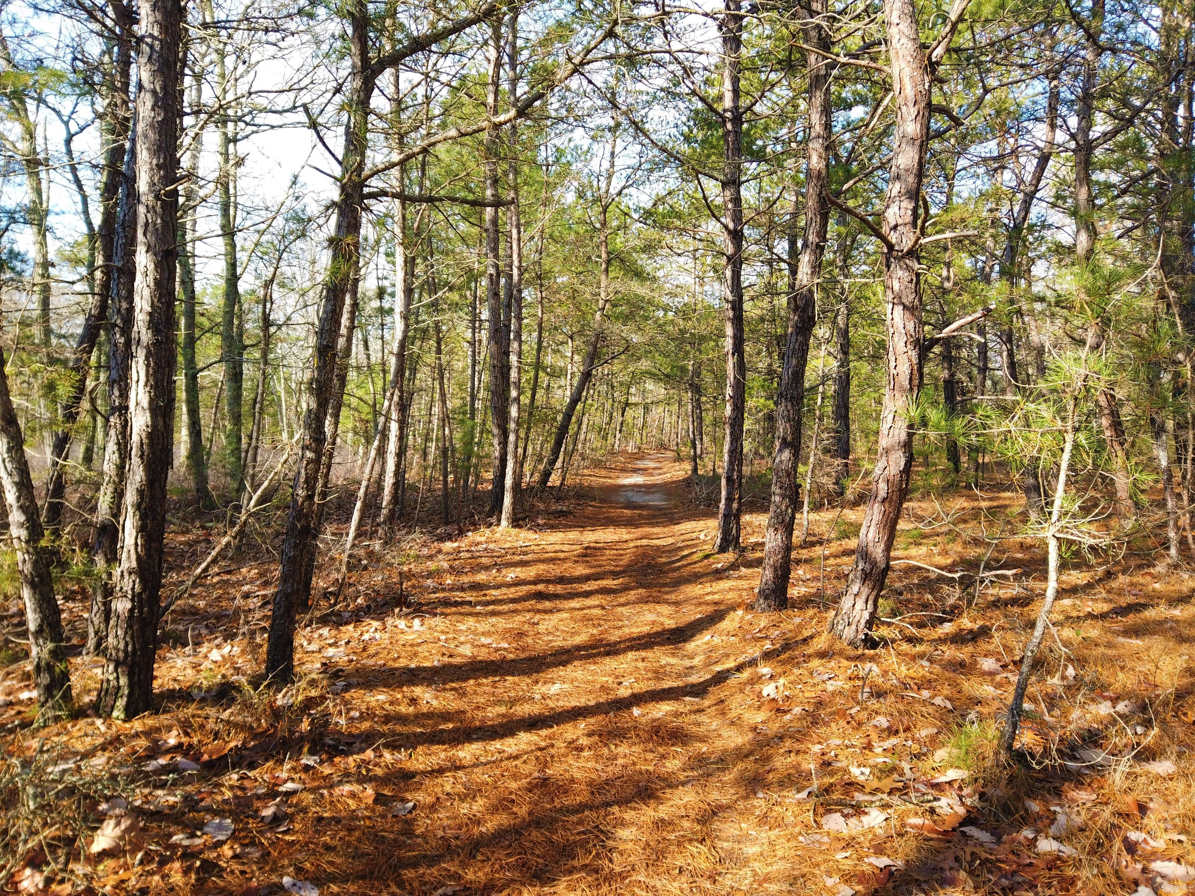 A nature trail is winding through the woods.