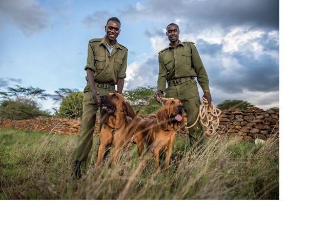 rangers with bloodhounds