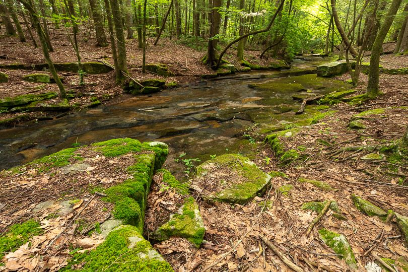 A creek meanders through a landscape of moss and rocks.