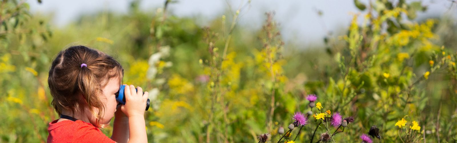 Young girl in pigtails wearing a red shirt hold a pair of blue binoculars up to her eyes to look at yellow and purple flowers in a prairie.