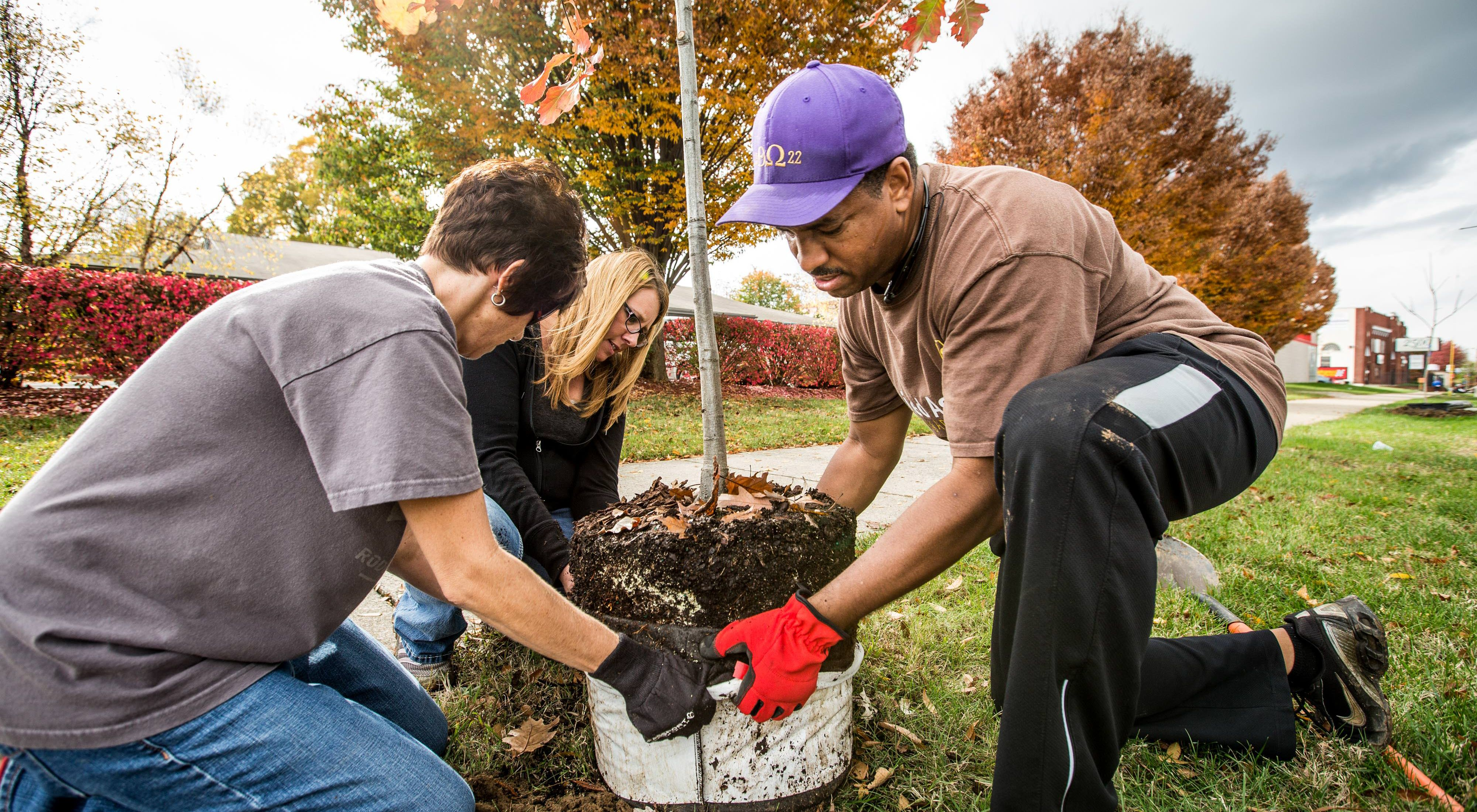 A group planting a tree.