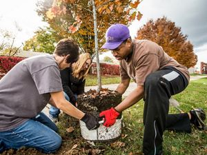 Volunteers plant a tree in Louisville.