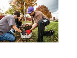 Image of three adults planting a tree.