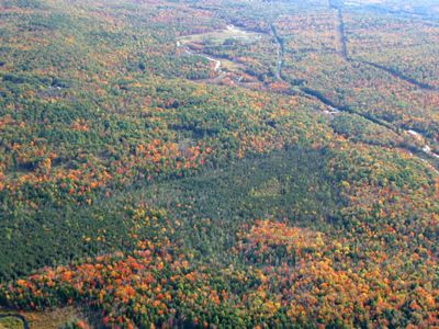 An aerial image of fall colors in trees.