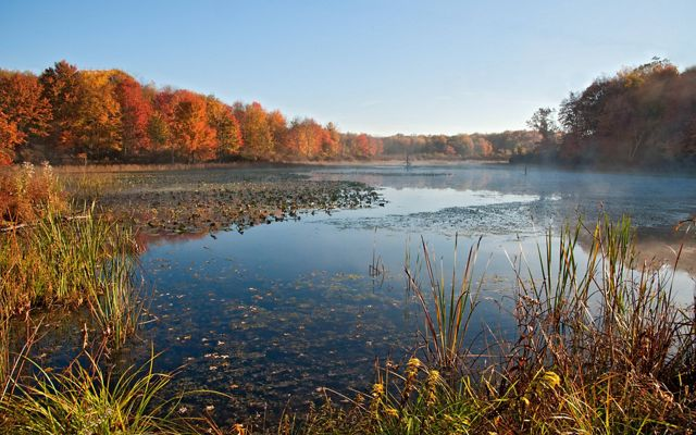 Overlooking a calm lake with marsh grasses in the foreground and surrounded by trees beginning to show muted fall colors.