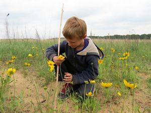 Young boy in blue coat admires yellow flowers on prairie.