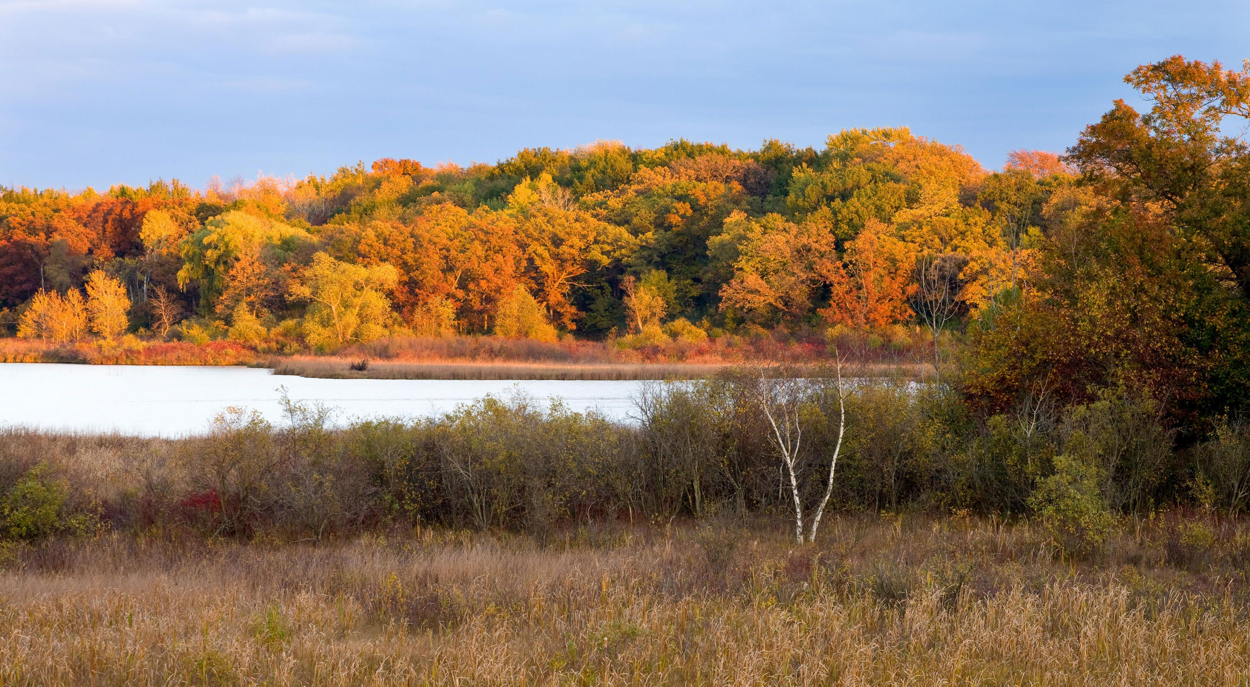 Sun lights up the fall colors in the forest with a small lake surrounded by wetlands in the foreground