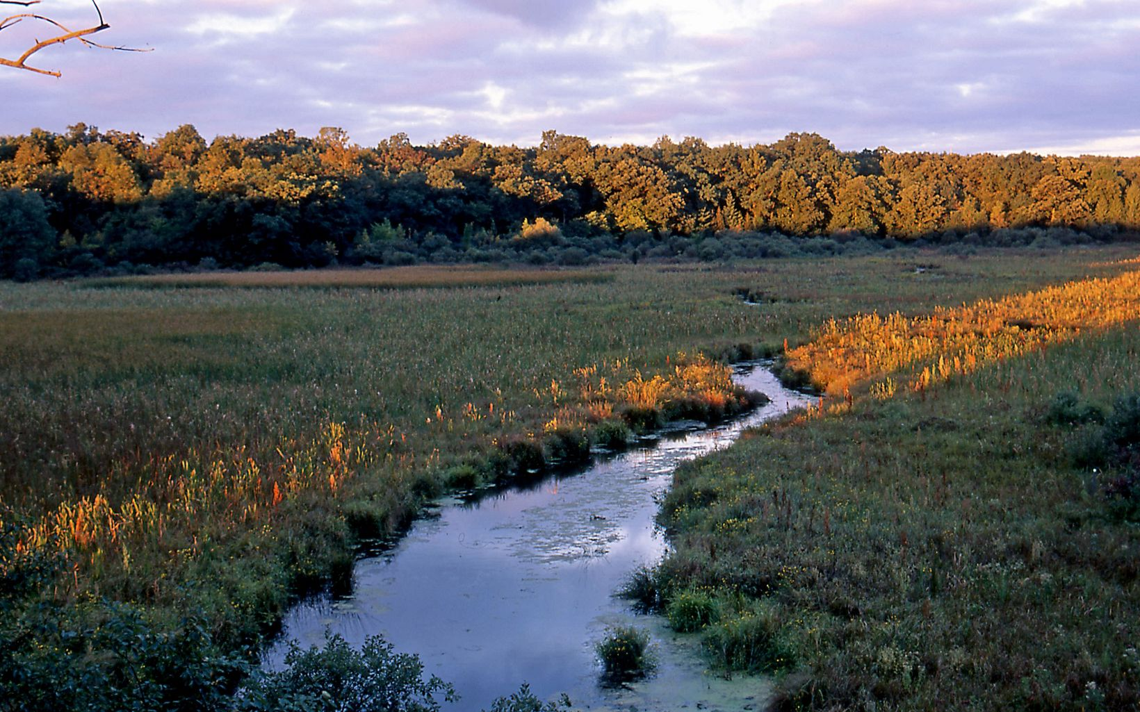 Crooked Creek winds its way through this preserve, which is also home to fens, bogs, prairies and oak woodlands.