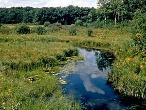 Stream through wetland near forest edge