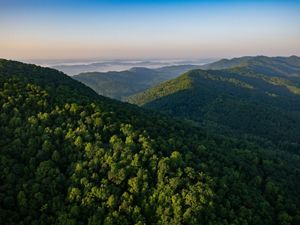 Aerial view of heavily forested mountains. The ridges roll away into the distance ending at the horizon. White mist rises in the deep valleys. The horizon is tinged pink as the sun rises.