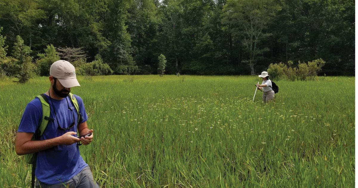 Dr. Deborah Landau and Chase McLean conduct a canby's dropwort ((oxypolis canbyi) survey on the Pristine Pines nature preserve.