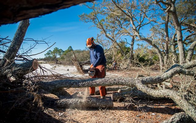 man buzz saws through fallen tree trunk after hurricane