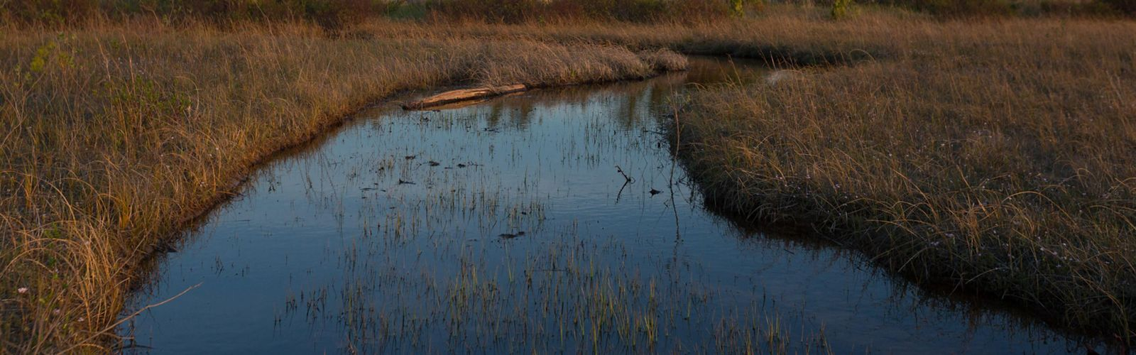 A coastal marsh with a small creek running through the center of the image. Shrubs and grass and both sides of the creek