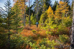 Man walking through a forest in autumn in Michigan