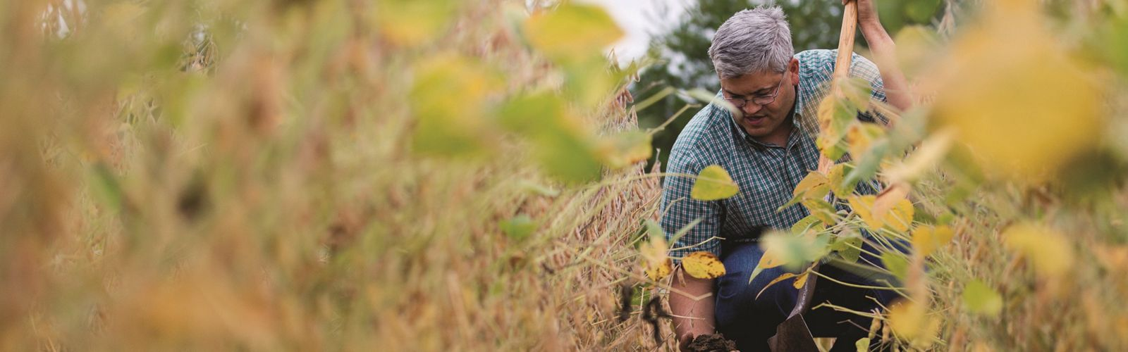 A man kneels in a agriculture plot to tend to his crops