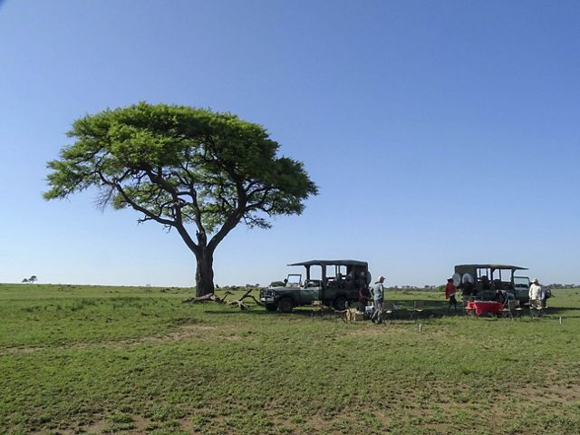 two safari jeeps under a tree with tables set up for breakfast