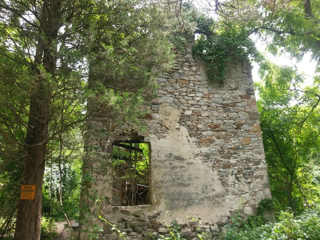 Old house remains in the woods.