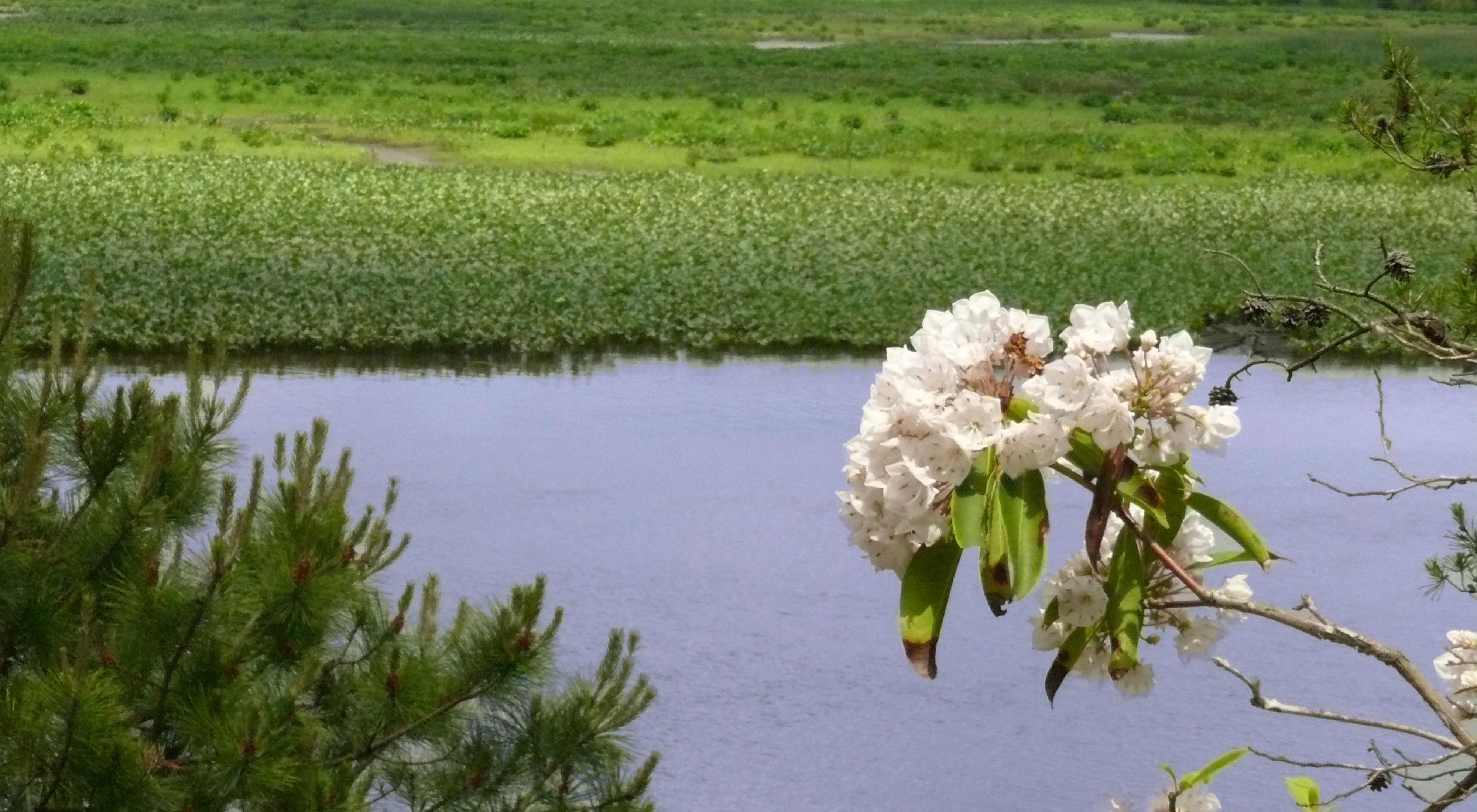 Maurice River Bluffs Preserve