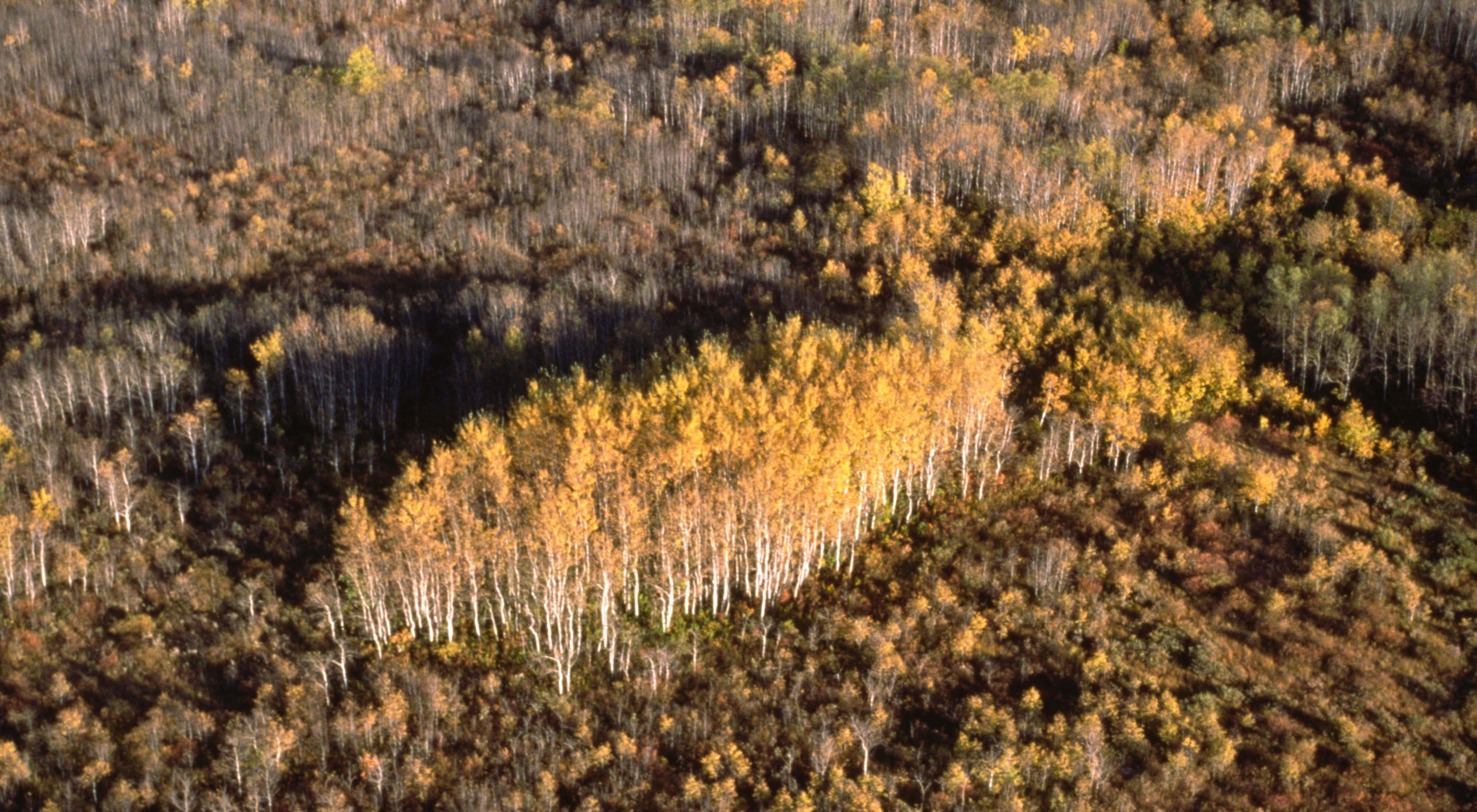 Tallgrass Aspen Parkland