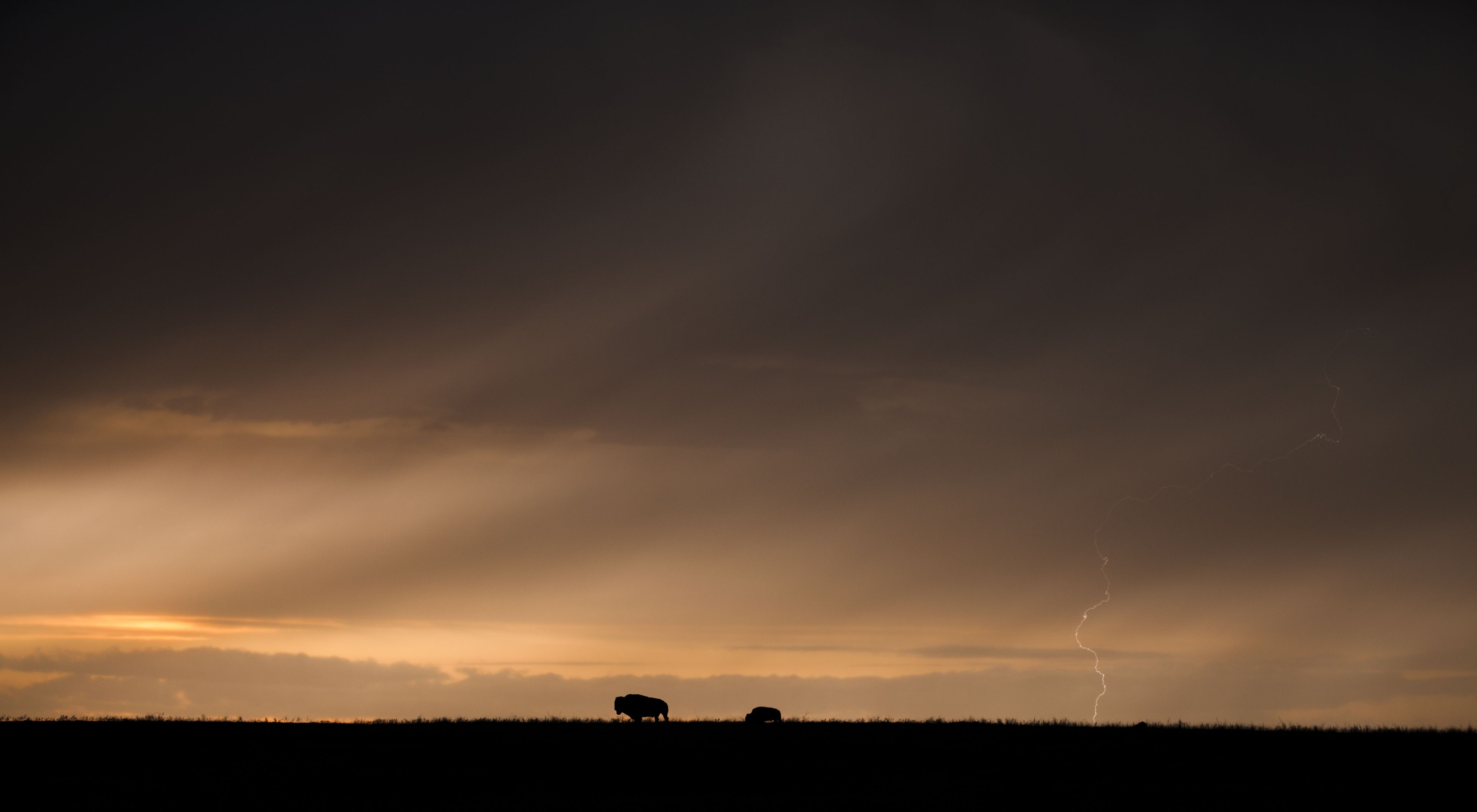 Bison in the distance silhouetted against a dark sky.