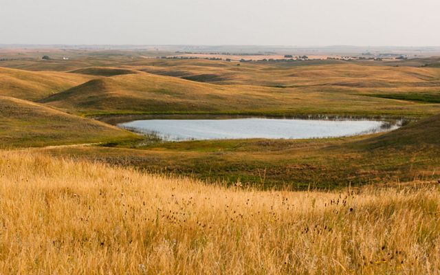 Overlooking the Missouri Coteau at the Davis Ranch in North Dakota that provides resilient habitat for nesting waterfowl in the face of climate change.