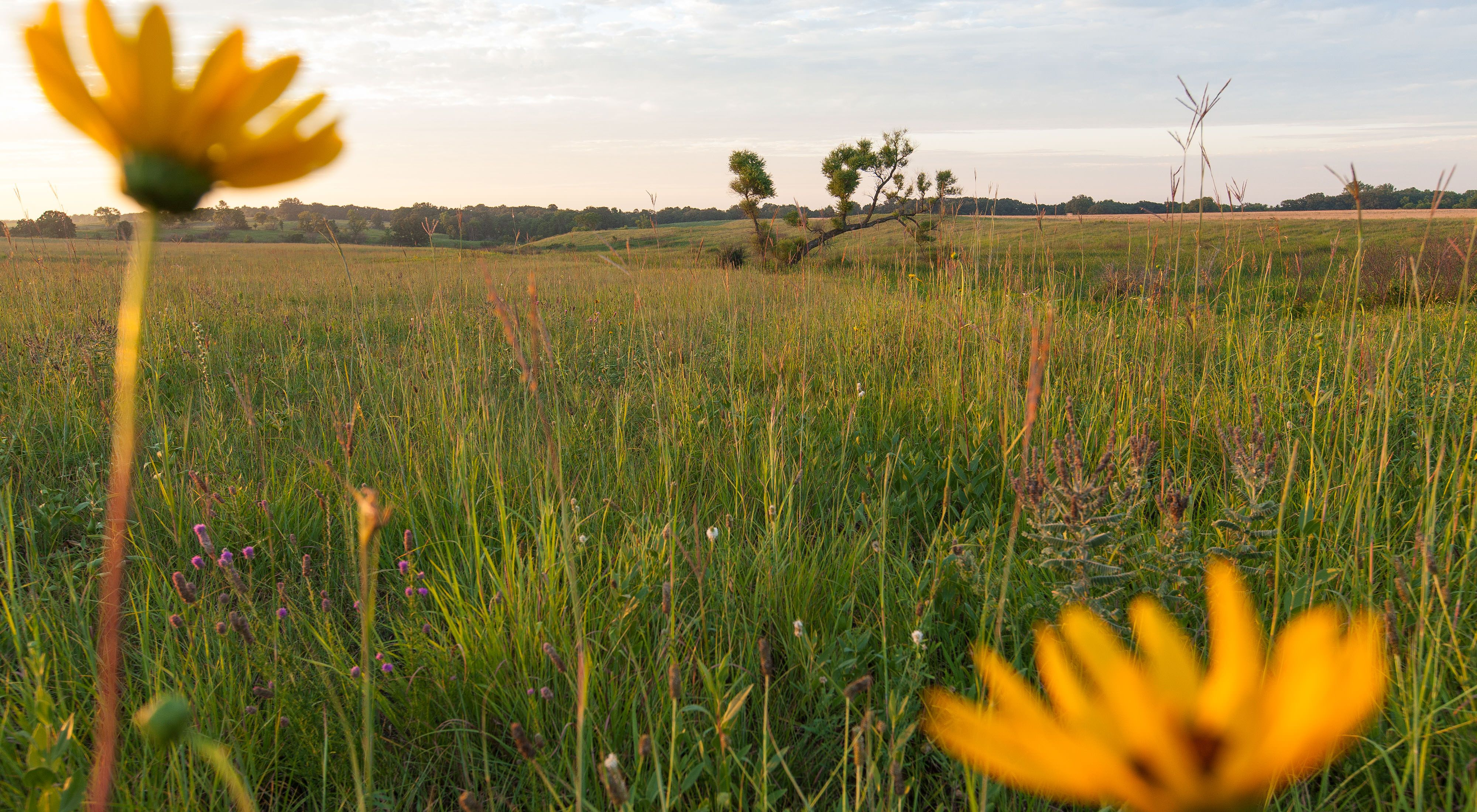 Wildflowers at TNC in North Dakota's Pigeon Point Preserve