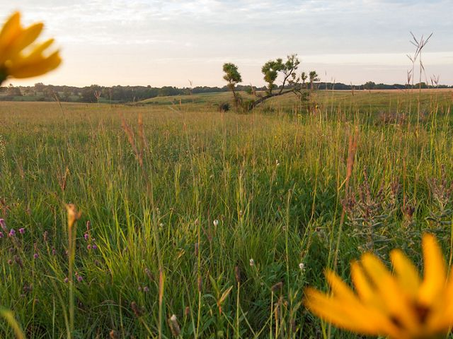Yellow wildflowers against a grassland backdrop.