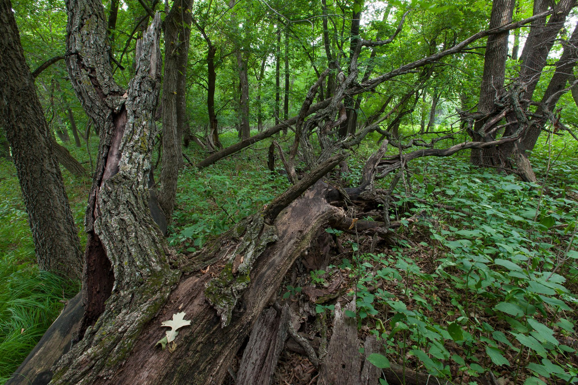 mixed deciduous forest.