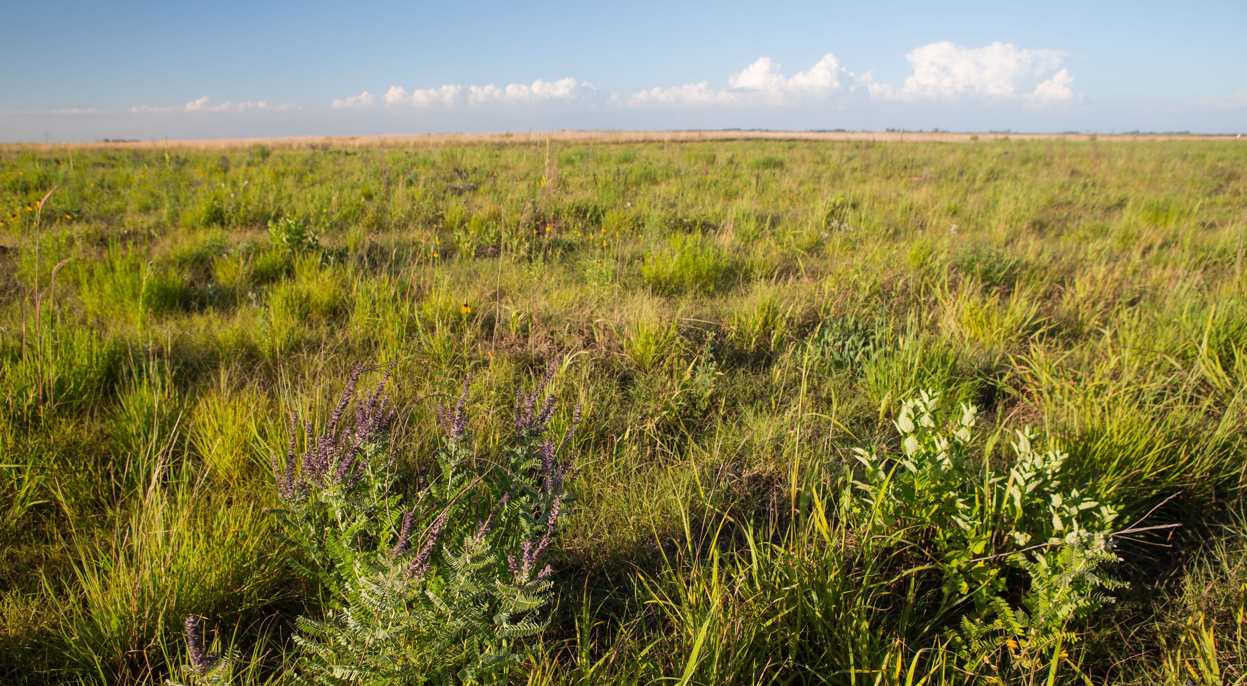 Glacial Ridge National Wildlife Refuge is the largest prairie-wetland restoration project in U.S. history.