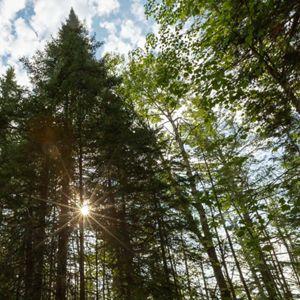 Sun shines through a tree line.