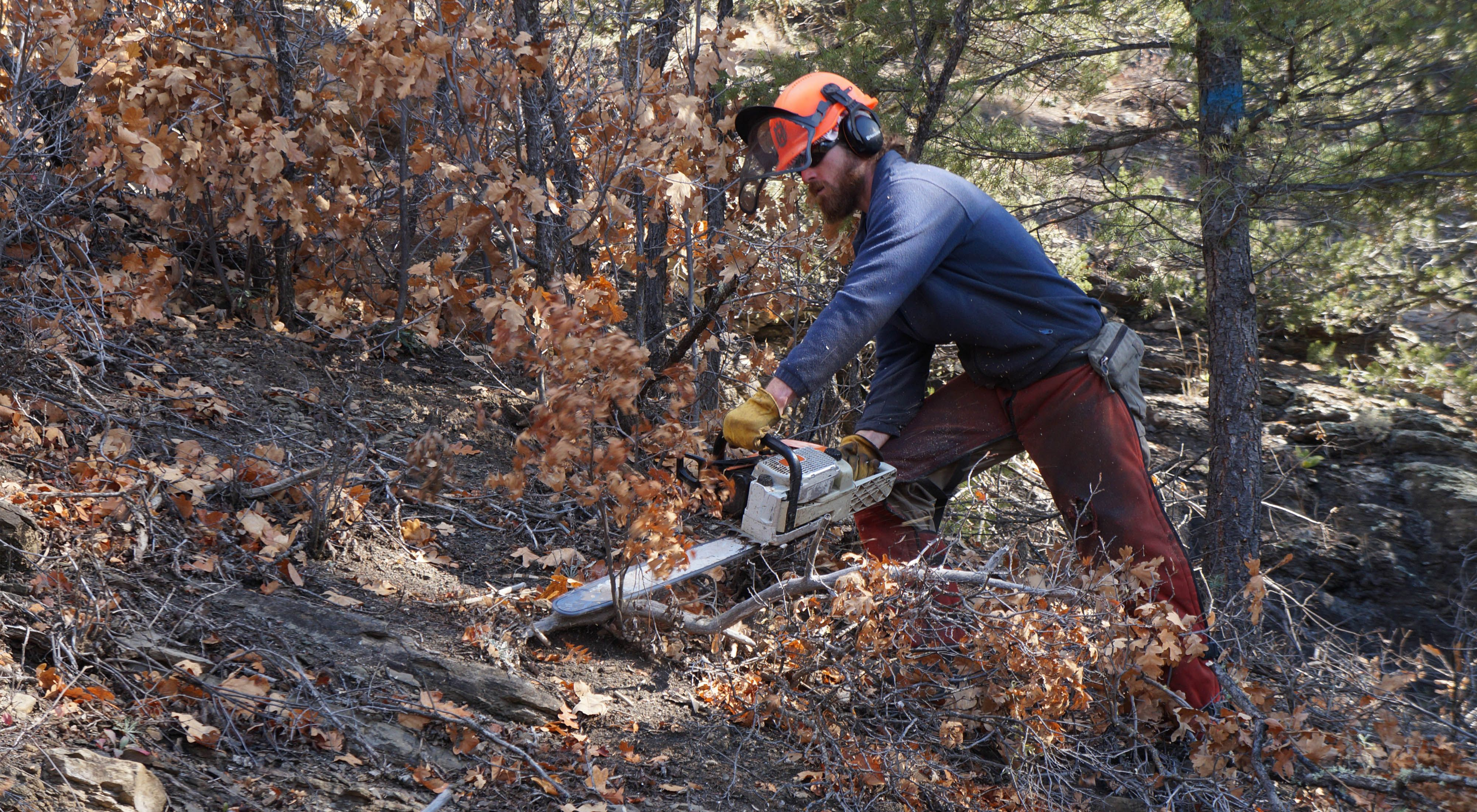a man cuts limbs off a downed tree with a chainsaw