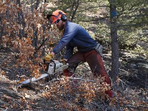 Man in orange hardhat using chainsaw in forest with autumn foliage