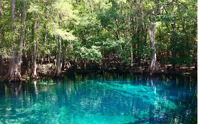 Clear blue water with a forest shoreline at Manatee Spring in Florida.