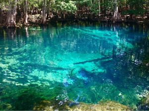 Manatee Springs in Florida