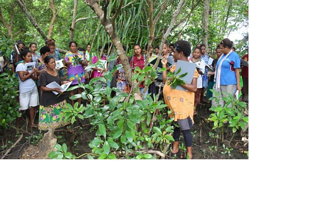 for ecological training for women in Alotau in Milne Bay, Papua New Guinea. The women learned about different mangrove species and how to restore them.