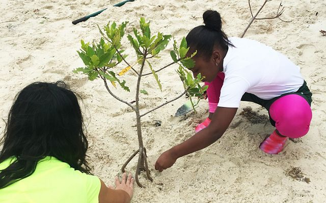 These volunteers plant mangroves on the Blowing Rocks Preserve shoreline as part of their field trip.