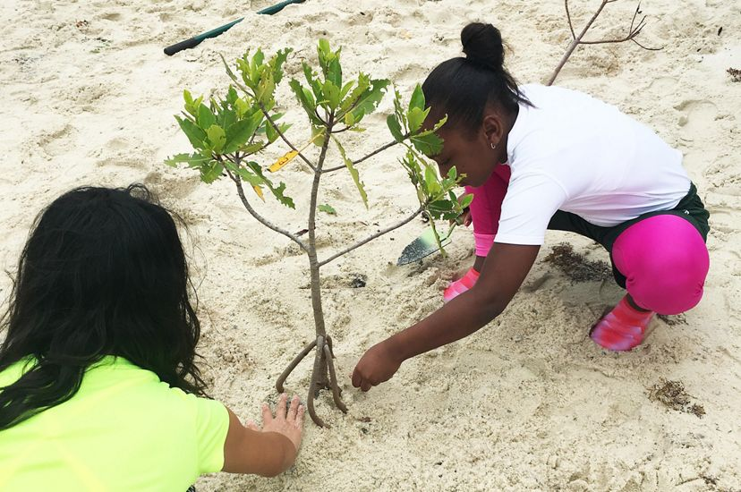 Two school children plant a young mangrove in the sand of a Florida nature preserve.