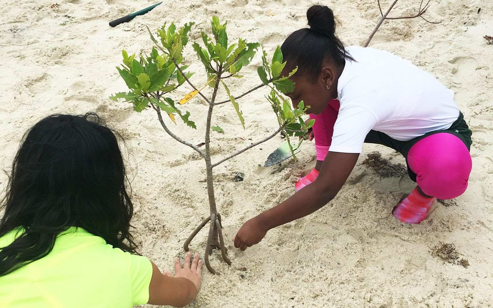 Two school children plant mangroves on the beach at Blowing Rocks Preserve.