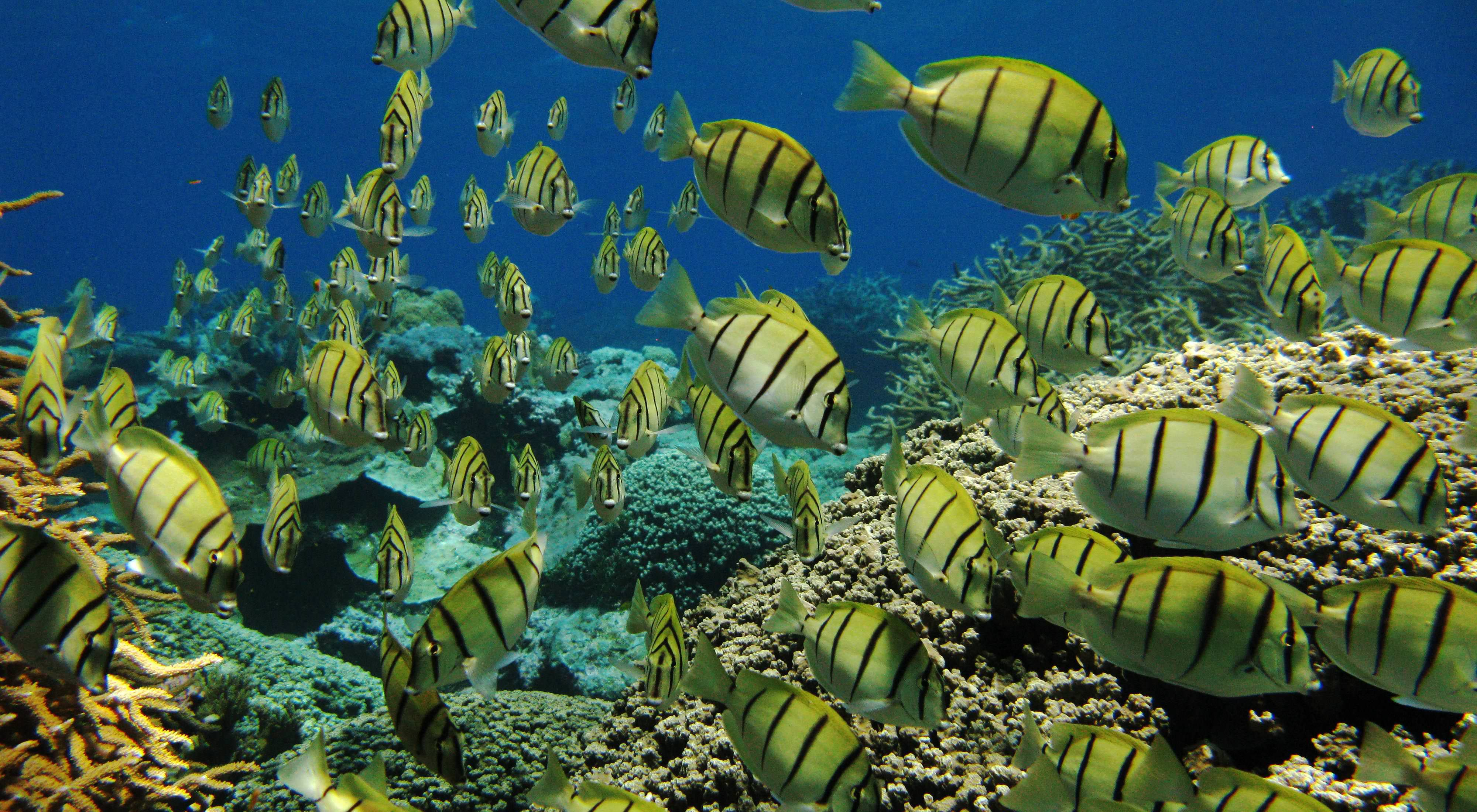 Reef fish help keep reefs healthy.