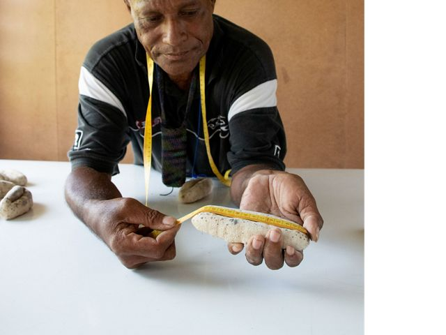 A community member measures a dried sea cucumber to ensure it is the correct size for sustainability.