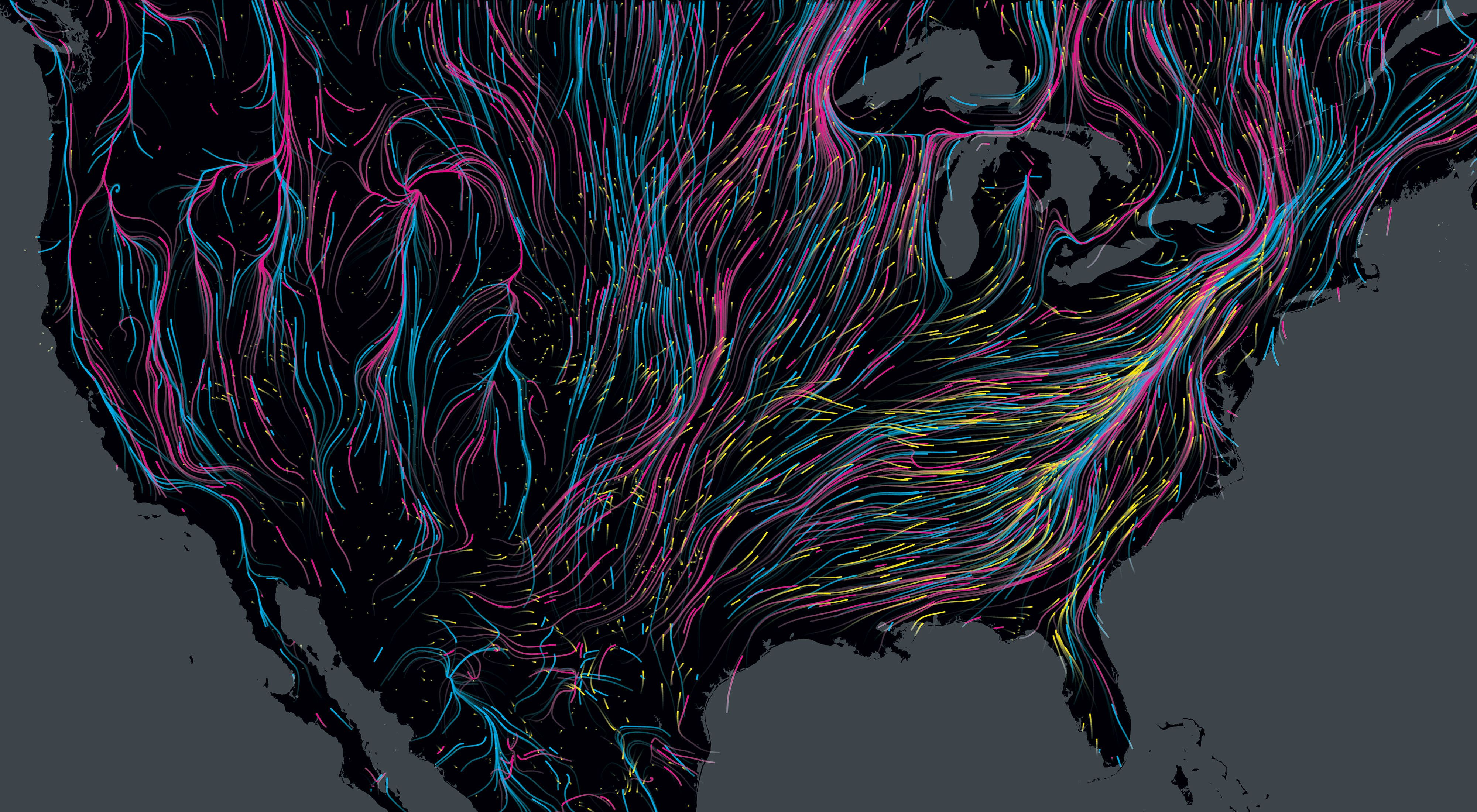 A map of the US is crisscrossed with the colorful paths different animals take as they migrate
