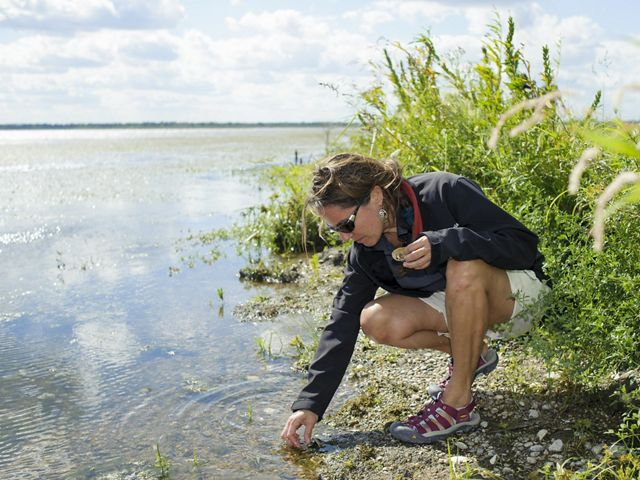 A scientists searches for mussels at the water's edge.