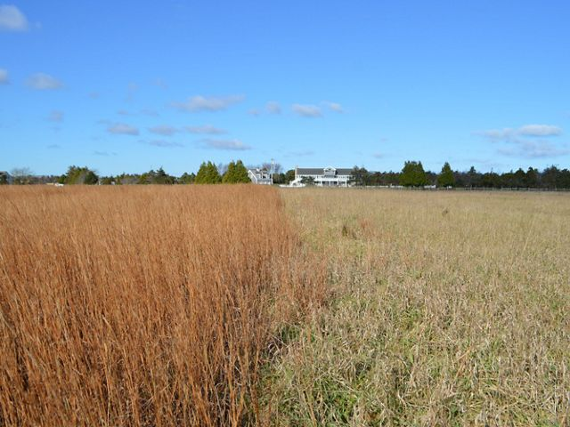 A grassland with blue partly cloudy skies in the background. The grass on the left is brown (not restored) and the grass on the right is green (under restoration).