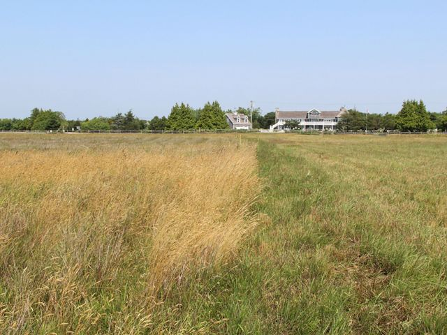A grassland with blue partly cloudy skies in the background. The grass on the left is yellow green (not restored) and the grass on the right is green (under restoration).